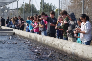 7Hatchery_students_feeding